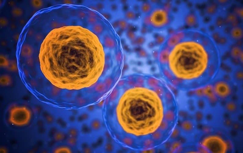 Grafica cellule immunitarie